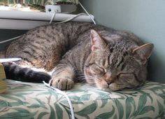 Tough day by RachelC via Flickr