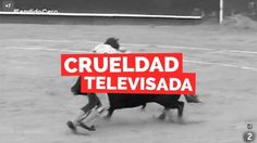 "Remove the bullfighting program ""Pavement zero"" programming"