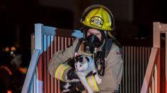 Une famille de 4 personnes doit une fière chandelle à son chat qui est parvenu à les sauver en les réveillant lors d'un incendie, jeudi, en Alberta.