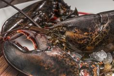 How do you cook your lobster? Canadian Lobster, American Lobster, Food Shrimp, Live Lobster, Atlantic Canada, Lobster Tails, Oysters, Seafood, Food Photography