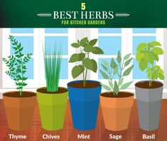 5 Best Herbs for Your Kitchen Garden // Looking to keep fresh herbs within arms reach of your cooking space? Try planting thyme, chives, mint, sage and basil... These herbs work the best!