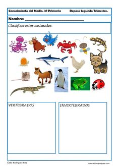 Actividad conocimiento del medio: Clasificar animales vertebrados y invertebrados.