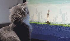 Was macht deine Katze, wenn du nicht zu Hause bist? | Lustige Bilder, Sprüche, Witze, echt lustig