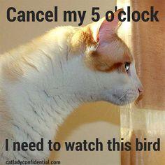 Cat meme - bird watching
