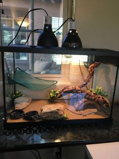 Most current Pictures Reptile Terrarium gecko Popular – Reptile Terrarium – – Amazing Reptiles Bearded Dragon Wings, Bearded Dragon Tank Setup, Bearded Dragon Vivarium, Bearded Dragon Food, Bearded Dragon Enclosure, Bearded Dragon Terrarium, Bearded Dragon Habitat, Bearded Dragon Cage Ideas, Bartagamen Terrarium