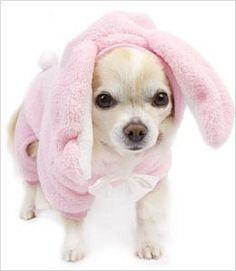Bunny dog pajamas. Cute!