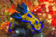 world's most beautiful sea animals
