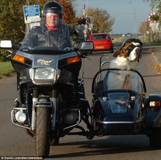 Community Post: 19 Dogs in Sidecars Womens Motorcycle Helmets, Scooter Motorcycle, Motorcycle Types, Motorcycle Travel, Motorcycle Girls, Vintage Motorcycles, Custom Motorcycles, Indian Motorcycles, Honda Motorcycles