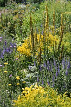 Landscape Design, Garden Design, Landscape Architecture, Garden Renovation Ideas, Prairie Planting, Residential Landscaping, Drought Tolerant Landscape, Home And Garden Store, Patio Plants
