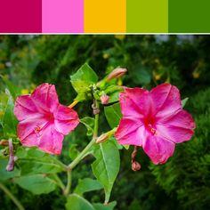 《Morning Flowers Palette》
