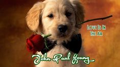 John Paul Young 💘Love Is In The Air