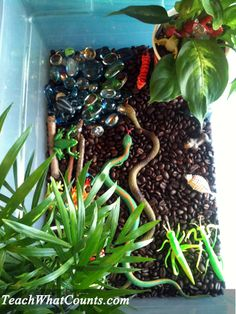 """A Rainforest Sensory Tub from Teach What Counts.. coffee beans, tropical plants, sticks, blue & green gems 'pond, & plastic animals & bugs. Also include measuring cups & spoons ("""",)"""