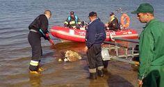 Wiosną w jeziorze Stryjewo znaleziono martwe jelenie. Poznaliśmy zagadkę ich śmierci.