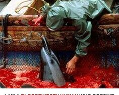 Refuse to give the Olympic Torch Light to the Japanese in 2020 unless they stop the Dolphin Slaughter at Taiji Cove Japan