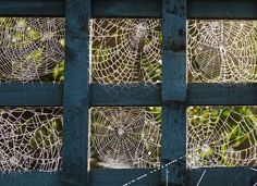 I am crazy afraid of spiders, but I think their webs are so beautiful. Spider Silk, Spider Art, Spider Webs, House Spider, Itsy Bitsy Spider, Charlottes Web, Mandala, Natural Wonders, Natural World