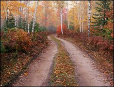 Michigan's Upper Peninsula: Hiawatha National Forest road passing through Paper birch trees and maples in Fall, near Half Moon Lake south of Munising, Michigan