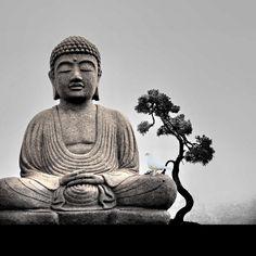 zen | buddha