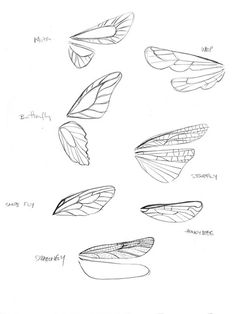 Drawing Animals Tips Tinkerbell 3 - Carolyn Gair - wings ✤ Fairy Drawings, Art Drawings Sketches, Animal Drawings, Fairy Wings Drawing, Drawing Animals, Indie Drawings, Fantasy Drawings, Pencil Art Drawings, Poses References