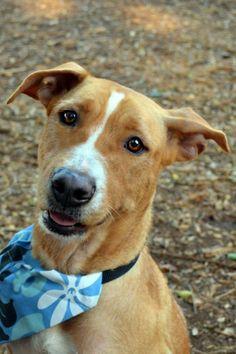 Make Bandanas for Rescue Dogs Dog Costumes 0bf6398de
