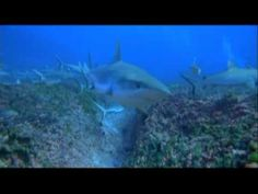 OceanWorld 3D trailer. I'll be sure to be there early to secure a good spot for the screening :)