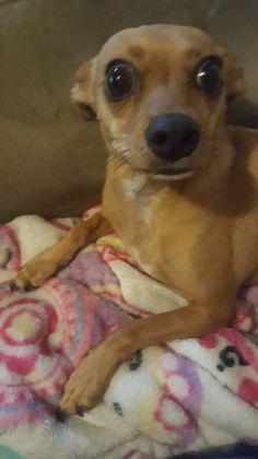 LOST DOG: 07/15/2017 - East Renton Highlands, Washington, WA, United States. Ref#: L34833 - #CritterAlert #LostPet #LostDog #MissingDog