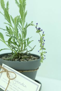 beautiful potted lavender gift with free printables via www.julieblanner.com