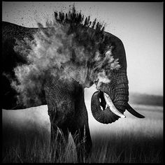 Photo Dust explosion II - Laurent Baheux