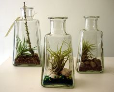 Reclaimed tequila bottles with tillandsias, designed by Oakland-based professional gardener, Kate Bailey. Perfect. Now I can combine my obsessions for glass and plants.