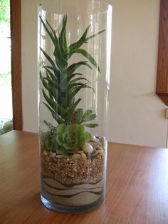 BY: Succulently Urban Plant In Glass, Glass Planter, Glass Garden, Succulents In Glass, Planting Succulents, Cactus Terrarium, Decoration Plante, House Plants Decor, Succulent Gardening