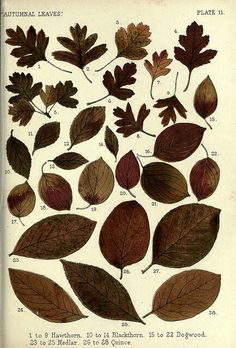 varias folhas