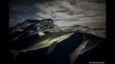 O fotógrafo prefere fotografar a céu nublado, com muitas nuvens e pouca luz. Na imagem, tubarões na ... - Fornecido por BBC Brasil