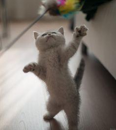 ラブリー-KittyCats、kotpourri:(氏Krabs経由)