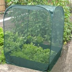 EASY garden netting from a Dollar Store hamper turned upside down. A couple stakes or rocks around the edges & it's bird/rabbit/squirrel proof!