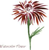 Watercolor drawing flower Royalty Free Stock Image