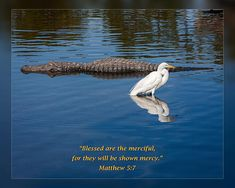 """From Daily Scripture Project by artist Dawn Currie - Beatitudes series: """"Blessed are the merciful, for they will be shown mercy."""" Matthew Photograph of a Florida Alligator and Great Egret peacefully coexisting. Daily Scripture, Scripture Art, Matthew 5 7, Bible Verses About Nature, Beatitudes, Catholic Art, Praise God, Christian Art, Bible Quotes"""