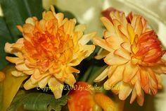 Cold Porcelain flowers: Cold Porcelain Chrysanthemum tutorial by Zahra Malak