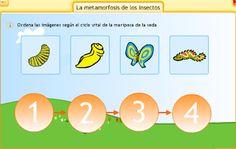 metamorfosis de la mariposa para niños imprimir - Bing Images