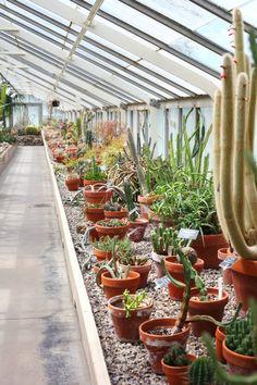 gimme all the cactus and succulents! Succulent Gardening, Succulents Garden, Garden Plants, Indoor Gardening, Dish Garden, Veg Garden, Garden Images, Diy Planters, Outdoor Landscaping