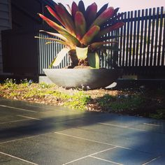 Bluestone modular modern paving in front of a large bowl that contains a giant bromeliad. Garden Features, Dream Garden, Outdoor Furniture, Outdoor Decor, Garden Plants, Garden Design, Garden Ideas, Tropical Gardens, Large Bowl