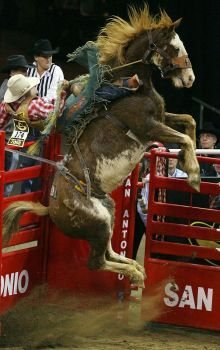 Dustin Flundra, from Pincher Creek, Alberta, competes in the saddle bronc finals aboard Elvis the horse during the San Antonio Stock Show & Rodeo at the AT&T Center on Feb. 16, 2008. Photo: Edward A. Ornelas, San Antonio Express-News