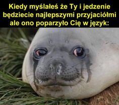 Read from the story MEMY ( ͡° ͜ʖ ͡°) 3 & czarny humor by lejdih (KOTEŁEG) with reads. Wtf Funny, Funny Fails, Funny Dogs, Funny Animals, Funny Memes, Reaction Pictures, Funny Pictures, See Games, Xbox 1
