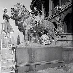 The Art Institute lions get a bath, 1934, Chicago.