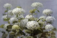 Poster (unframed) White Hydrangea Garden