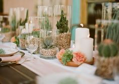succulents and terra cotta trays