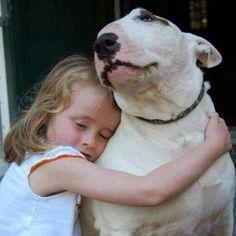25 razones para no tener un Bull Terrier - Bull Terrier