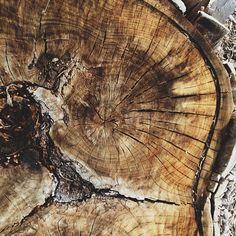 wood | cracks