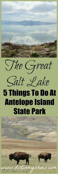 5 Things You Cant Miss At The Great Salt Lake - Antelope Island State Park