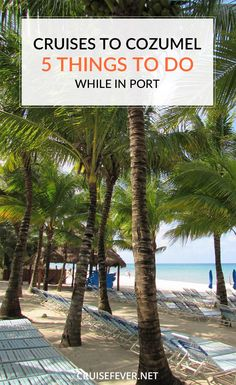 If you are heading to Cozumel on a cruise and are looking for something to do while in port, here are a few options that you may want to consider.