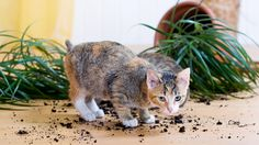 10 household plants that are dangerous for dogs and cats
