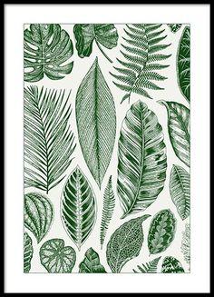 Green Leaves Plakat i gruppen Plakater / Botaniske hos Desenio AB (8782)